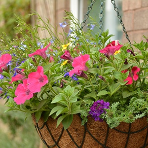 Hanging Basket Watering Kits